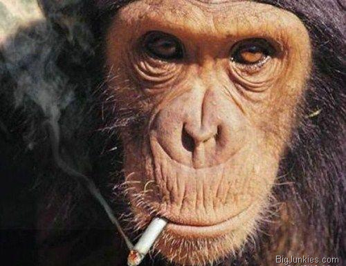 Meet Cigarette Smoking Monkeys